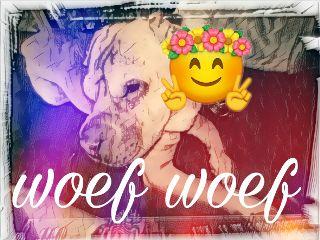 woef dog freetoedit