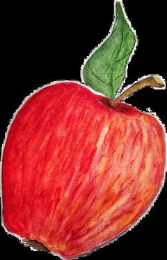 apple fruit red autumn sweet freetoedit