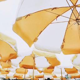 sun umbrellas sunumbrella umbrella umberellasky freetoedit