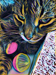 catsofpicsart