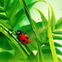 freetoedit nature spain sumer ladybug