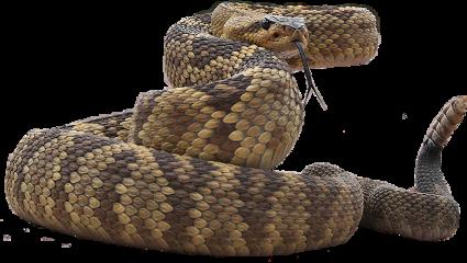 snakes freetoedit