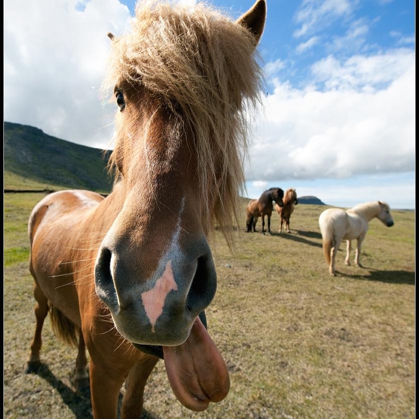 Для, картинки с приколами о лошадях