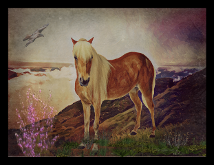 freetoedit horses lonely