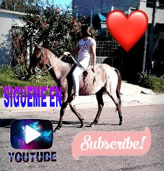 youtuber youtube loveyoutube lovehorses freetoedit