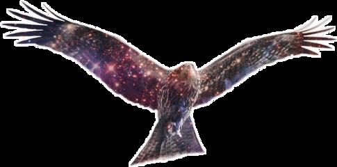 ftestickers bird galaxy doubleexposure freetoedit