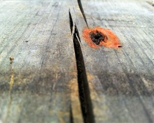 wood photography freetoedit nail rust