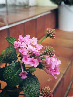 flower aftertherain dodgereffect