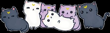 ftestickers cats cute:) ftecats freetoedit