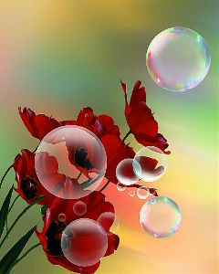 bubbles poppies oilpaintingeffect flowers red