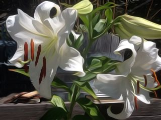 editoverphoto oilpaintingeffect lillies flowers sunlight freetoedit