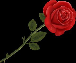 rose ftestickers freetoedit