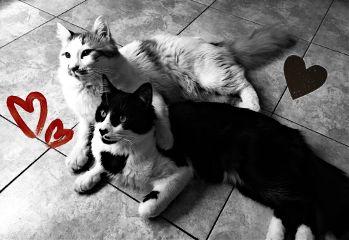 catslover