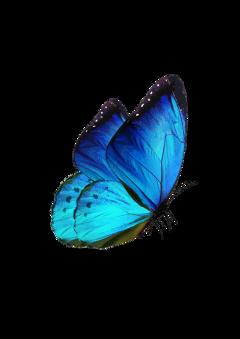butterfly ftestickers freetoedit