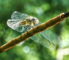 freetoedit flydragonart nature closeup