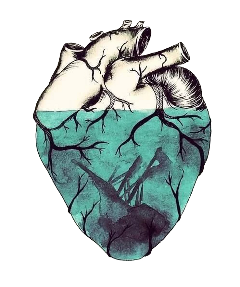 органы. сердце. freetoedit