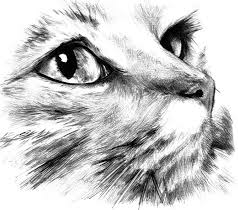 catstickers catloverforever catalonia freetoedit
