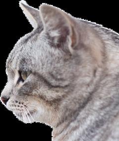 cat cats freetoedit