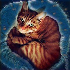 freetoedit catday cat petsandanimals cute