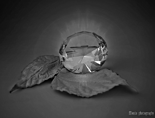 crystal leaf blackandwhite hdr photography
