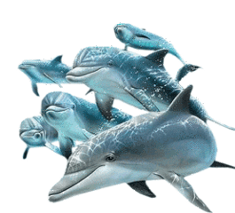 ftestickers dolphins freetoedit