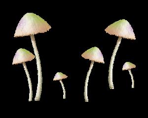 mushrooms garden ftestickers freetoedit