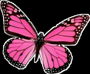 butterfly butterflies papillon mariposa ftestickers