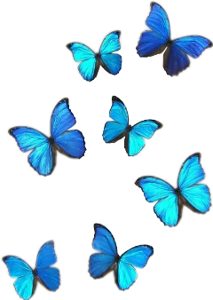 blue freetoedit butterflies