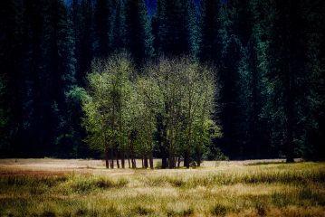 angeleyesimages landscapelover landscape landscapephotographer nature freetoedit
