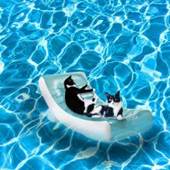 summer lazy cats swimmingpool freetoedit