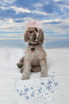 puppy dog animals queen picsart freetoedit