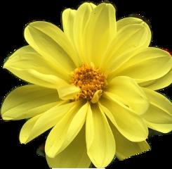 yellowflower freetoedit