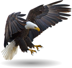 aguia freetoedit