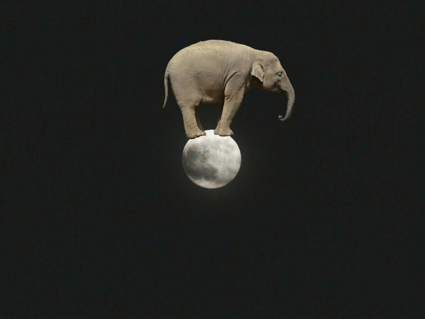 #moon #elephant #circus