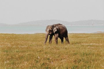 freetoedit elephant animal landscape nature