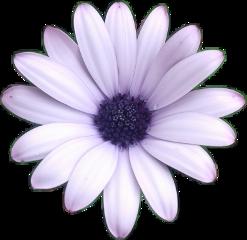 flores flowers flor flower purple