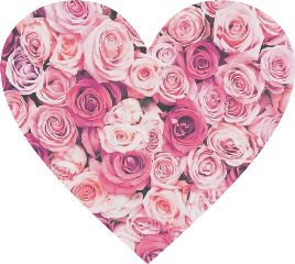 heart love roses flowers pink