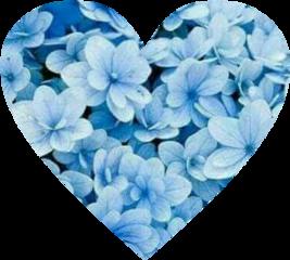 love heart blue floral flower