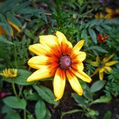 flowers summer holidays beautifulnature russia