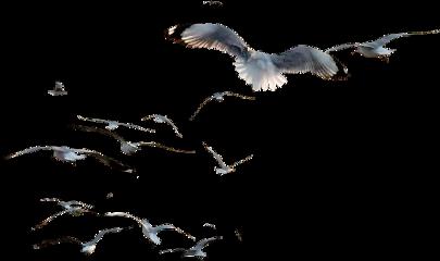 ftestickers ftesticker birds bird flying