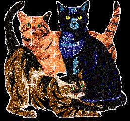 cats animallovers meow kittens glitter