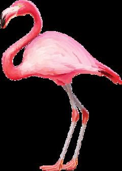flamingo flamingopink flamingos pink tumblr