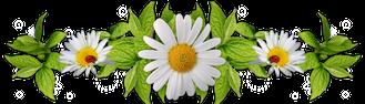 flowers daisy ornament border