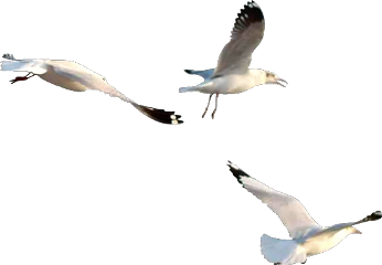 ftestickers ftesticker birds bird fly