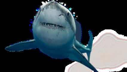 shark freetoedit