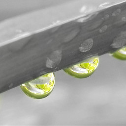 freetoedit dew dews nature naturephotography