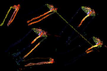 kite freetoedit