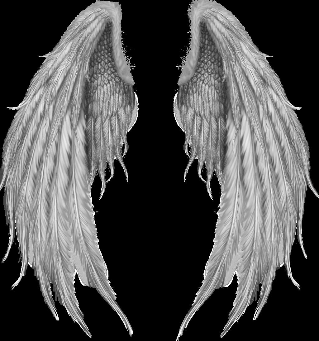 Alas De Angel Imágenes De Archivo Vectores Alas De Angel Fotos