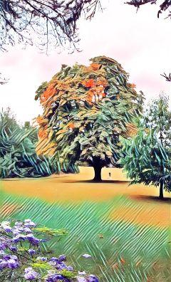 freetoedit woodland
