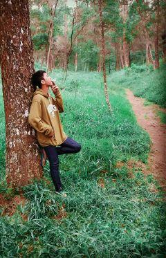 freetoedit pohonpinus nyantai ngelepuss